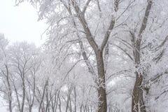 Vinterlandskap, fryste träd arkivfoton