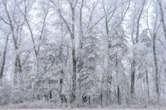 Vinterlandskap, fryste träd Royaltyfria Foton