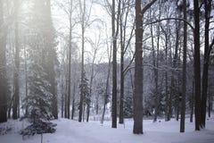 Vinterlandskap, härlig snöig plats i skogen arkivfoton