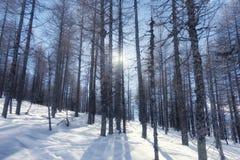 Vinterlandskap i bergskog med snö Fotografering för Bildbyråer