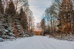 Vinterlandskap i den Harz bergnationalparken, Tyskland arkivfoton