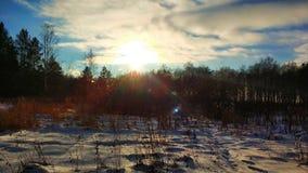 Vinterlandskap i den Urals skogen p? en solig dag royaltyfri fotografi
