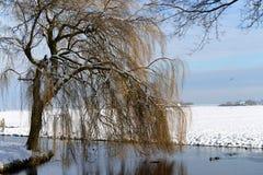 Vinterlandskap i edamer Arkivbild
