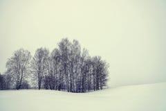 Vinterlandskap i en dyster dag Fotografering för Bildbyråer