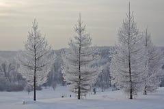 Vinterlandskap i frostig dag Arkivfoto