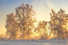 Vinterlandskap i gult solljus Frostig natur för landskap vita röda stjärnor för abstrakt för bakgrundsjul mörk för garnering mode royaltyfria bilder