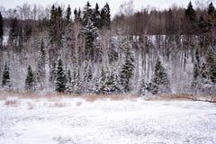 Vinterlandskap i Lettland royaltyfri fotografi