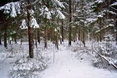 Vinterlandskap i Lettland arkivfoto