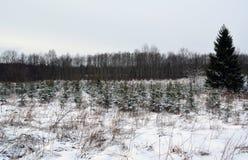 Vinterlandskap i Lettland arkivbilder