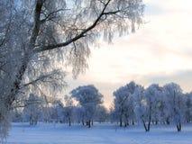 Vinterlandskap i rimfrost arkivbild