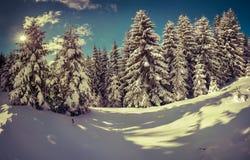Vinterlandskap i skogen Royaltyfri Fotografi
