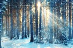 Vinterlandskap i skogen arkivfoton
