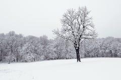 Vinterlandskap i snöig fryste träd för skogvinter skog Royaltyfri Foto