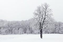Vinterlandskap i snöig fryste träd för skogvinter skog Royaltyfri Bild