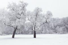 Vinterlandskap i snöig fryste träd för skogvinter skog Royaltyfria Foton