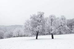 Vinterlandskap i snöig fryste träd för skogvinter skog Arkivbilder