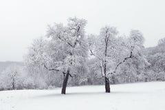 Vinterlandskap i snöig fryste träd för skogvinter skog Royaltyfria Bilder