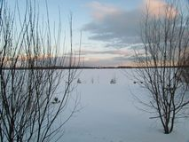 Vinterlandskap i snönatur med trädet Royaltyfria Bilder