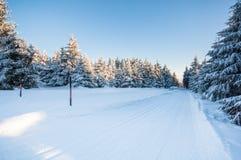 Vinterlandskap med den nya rena snö, solen och julgranar Royaltyfri Bild