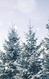 Vinterlandskap med dolda granar för snö Royaltyfria Foton