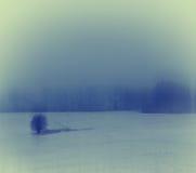 Vinterlandskap med ett ensamt träd Arkivfoto