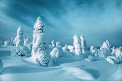 Vinterlandskap med granar Montering Kivakka Ryssland arkivfoto