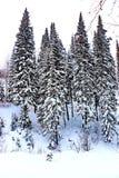 Vinterlandskap med massor av härliga träd arkivbild