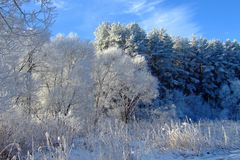 Vinterlandskap med skogen och träd winterly morgon av en ny dag med mycket snö arkivbild