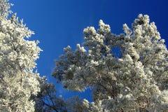 Vinterlandskap med skogen och träd winterly morgon av en ny dag med mycket snö arkivfoto