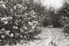 Vinterlandskap med snö och banan fotografering för bildbyråer