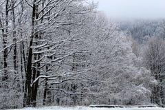 Vinterlandskap med snö och dimma Royaltyfria Bilder