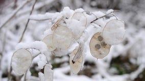 Vinterlandskap med snö som faller på härligt stock video