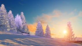 Vinterlandskap med snöig granar på solnedgången Arkivbilder