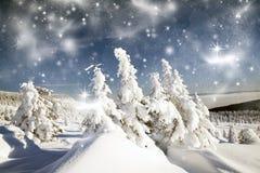 Vinterlandskap med snöig granträd Arkivbild