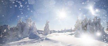 Vinterlandskap med snöig granträd Royaltyfria Bilder