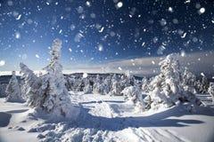 Vinterlandskap med snöig granträd Royaltyfri Fotografi