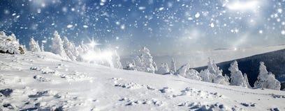 Vinterlandskap med snöig granträd Arkivfoton