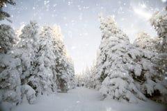 Vinterlandskap med snöig granträd Royaltyfria Foton
