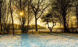 Vinterlandskap med solnedgång Royaltyfria Foton