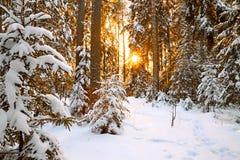 Vinterlandskap med solnedgång i skogen arkivfoton