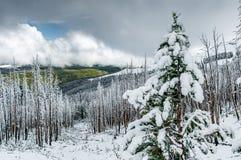 Vinterlandskap på det Dunraven passerandet, Yellowstone NP fotografering för bildbyråer