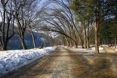 Vinterlandskap på Nami Island, Korea Arkivbilder