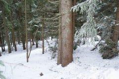 Vinterlandskap som är högt i bergen arkivfoton