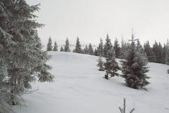 Vinterlandskap som är högt i bergen royaltyfri fotografi