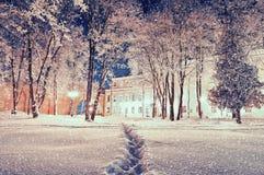 Vinterlandskap - stadsvintern parkerar med frostade träd under att falla som är insnöat natten Royaltyfri Bild