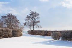 Vinterlandskap under blå himmel Royaltyfri Fotografi