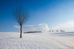 Vinterlandskap under blå himmel Royaltyfria Foton