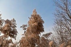Vinterlandskap utan snö Arkivbild