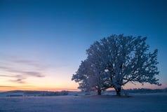 Vinterlandskap, väg, snö-täckte träd Mycket härlig tid nn Fotografering för Bildbyråer