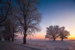 Vinterlandskap, väg, snö-täckte träd Mycket härlig tid nn Royaltyfri Bild